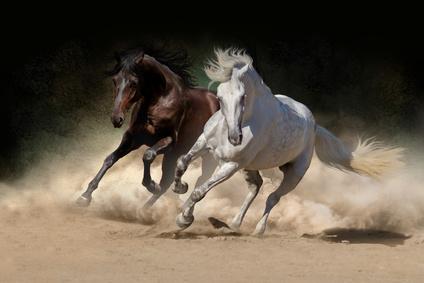 Pferde-OP Versicherung für Andalusier