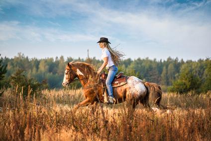 Pferde-OP Versicherung für Appaloosa