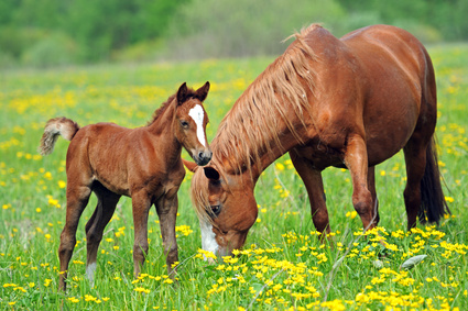 Pferde-OP Versicherung für Brandenburger